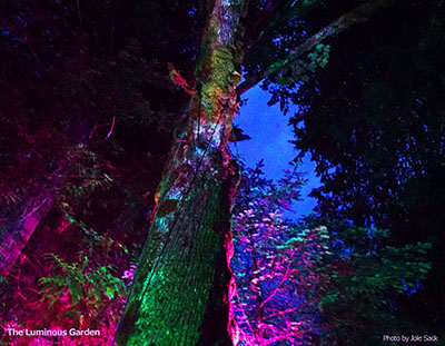 The Luminous Garden